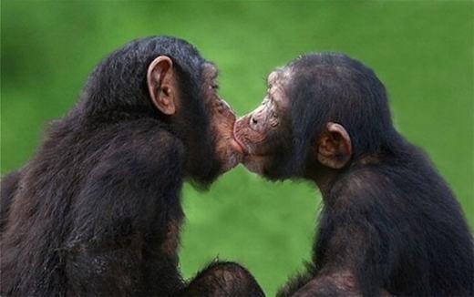 Lần sau có hôn môi thì cũng lựa chỗ kín kín đi! (Ảnh: Internet)