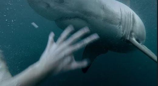 Cá mập rất nguy hiểm đối với con người. (Ảnh: Internet)
