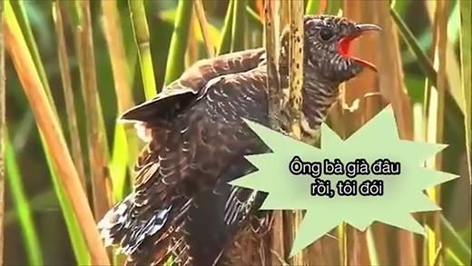 Cận cảnh loài chim