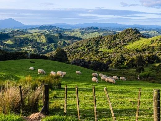 Không thể bàn cãi thêm gì nữa khi nói New Zealand là vùng đất dành cho những người thích mạo hiểm. Đi trên cáp treo không có điện bắc ngang đảo Great Barrier, ngâm mình trong làn nước trong vắt của suối nước nóng Maruia, đi bộ qua địa hình núi lửa trong vườn quốc gia Tongariro, du khách sẽ cảm thấy mình trở nên thân thiết với thiên nhiên hơn bao giờ hết.(Ảnh: Business Insider)