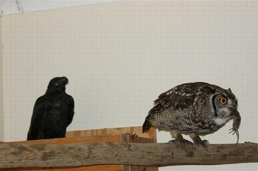 ...và cả chú chim do ân nhân đangnuôi dưỡng. (Ảnh: Internet)