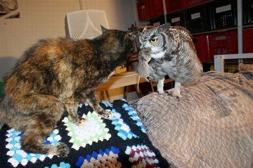Chú cũng kết thân với con mèo... (Ảnh: Internet)