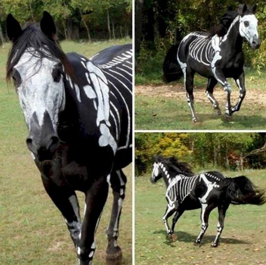 """Chắc chắn anh chàng ngựa chịu chơi này sẽ làm khối người """"hết hồn hết vía""""vào ban đêm đấy.(Ảnh: Diply)"""
