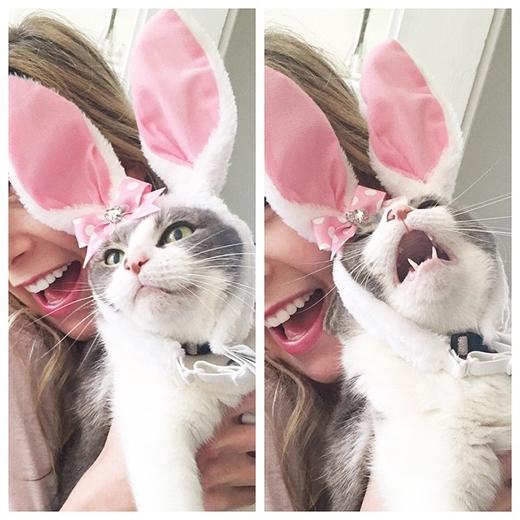 """""""Ghét nhất mấy con thỏ đó nghe. Làm ơn tháo ra nhé"""".(Nguồn: Internet)"""
