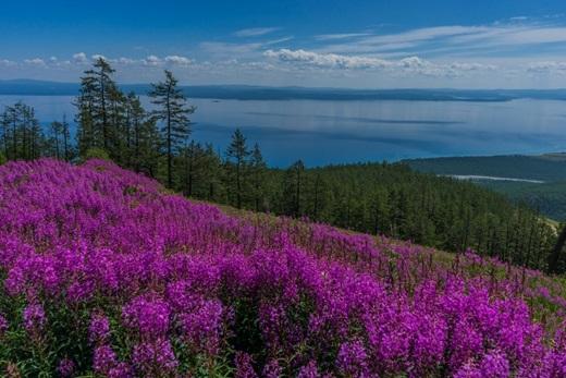 Từ tháng 6 đến tháng 9 hàng năm, hàng trăm loài hoa dại ở thảo nguyên Yili đua nhau khoe sắc, tạo nên cảnh quan làm say mê lòng người.(Ảnh: Internet)