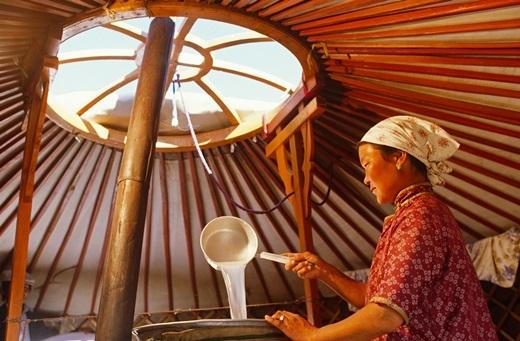 Một người phụ nữ đang chuẩn bị sữa cho quá trình chưng cất để nấu arkhi – thức uống truyền thống của Mông Cổxuất hiện từ thế kỉ 14. Để có được arkhi, người Mông Cổ phải thực hiện quy trình lên men sữa ngựa hoặc sữa bò Tây Tạng.(Ảnh: Internet)