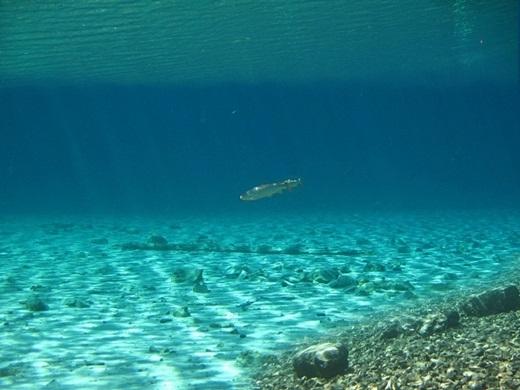 """Người ta còn tìm thấy một vài con cá bơi lội trong chiếc hồ """"tạm bợ"""" này. (Ảnh: Internet)"""
