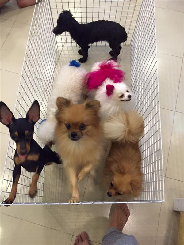 Lộ diện kẻ tình nghi hạ độc 15 chú chó khiến dư luận phẫn nộ