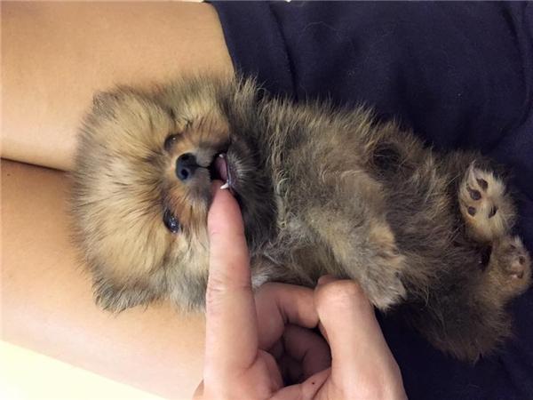Hoàng Duybên nhũng chú chó của mình khi chúng còn sống. (Ảnh:Internet)