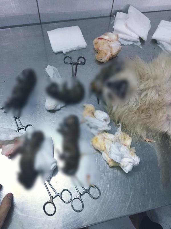Đàn chó qua đời trong sự tiếc nuối, đau khổ củaHoàng Duy.(Ảnh:Internet)