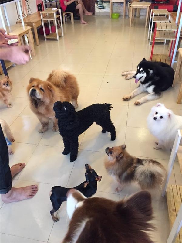 Ngắm nhìn đàn chó dễ thương khi còn sống khiến nhiều bạn trẻ không khỏi xót xa.(Ảnh: Internet)