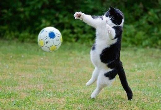"""""""Mèo thủ môn dù bụng hơi """"bự"""" nhưng làtài năng trẻ trong tương lai!"""". (Ảnh: Internet)"""