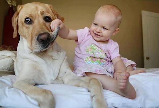 """""""Đi nha khoa đi cún ơi, răng cậu sâu rồi!"""". (Ảnh: Internet)"""