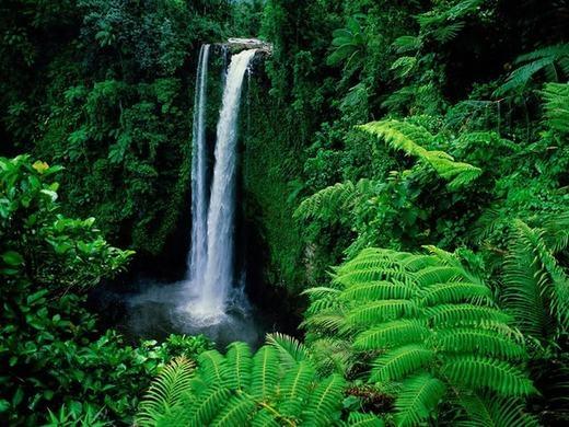 Thực vật rừng bị đặt tên sai nhiều nhất. (Ảnh: Internet)