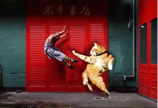 Kung-fu mèo!(Ảnh: Internet)