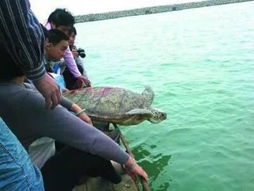 Ít ai ngờ con rùa này sau đó đã cứu sống con trai ông Lâm. Ảnh: Internet