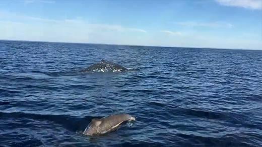 Nhóm bạn may mắn được cá heo lẫn cá voi