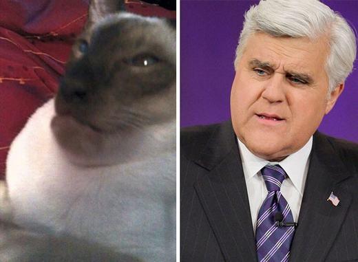 """""""Đây đâu phải mặt mèo nhỉ? Mặt của dơi mà!"""". (Ảnh: Internet)"""