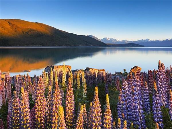 Thiên nhiênNew Zealandluôn dịu dàng và mộc mạcnhư một cô thôn nữđáng yêu. (Ảnh: IG@guy_havell)