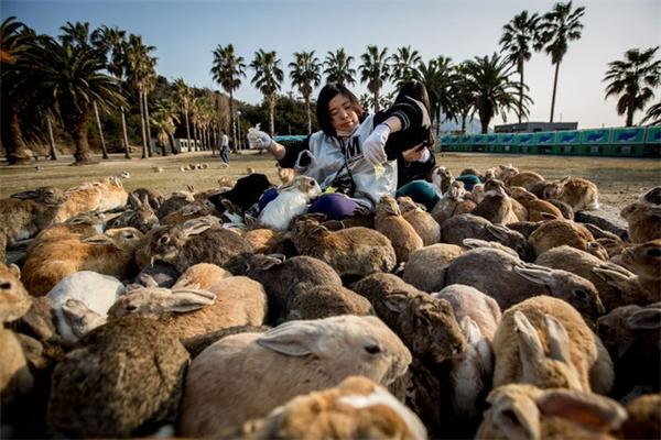 Có cả nguyên một hòn đảo dành cho những chú thỏ.(Ảnh: BuzzFeed)