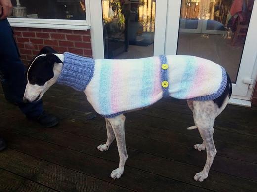 """""""Có rất nhiều chú chó chưa được nhận nuôi vào dịp Giáng Sinh năm nay, vì thế đối với chúng, đây chính là món quà duy nhất chúng nhận được"""".(Ảnh: Internet)"""