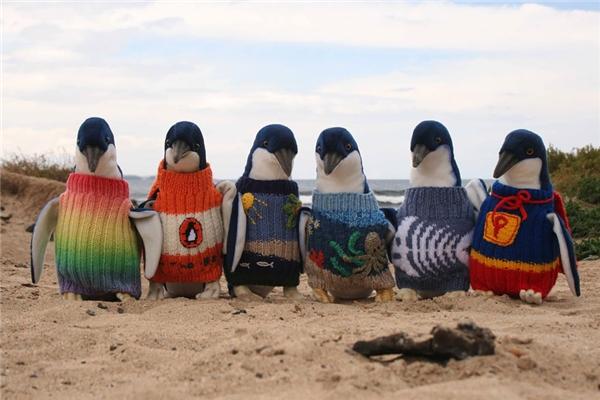 Hay cụ ông Alfred Date 109 tuổi người Úcđã dành 80 năm cuộc đời để đan áo len cho những chú chim cánh cụt đang gặp nguy hiểm. (Ảnh: Internet)