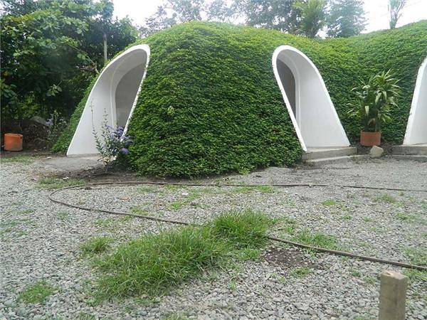 Nếu là một người yêu thiên nhiên, bạn có thể phủ xanh cho mái nhà mình.(Ảnh: Bored Panda)