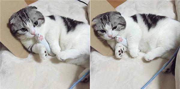 Gặp gỡ cô mèo