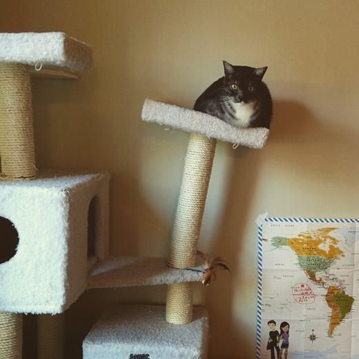 """""""Ta là chim, ta đậu trên cành, ta không phải là mèo!"""".(Ảnh: Internet)"""