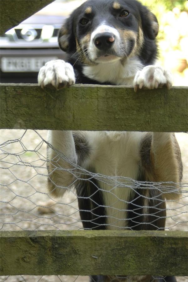 """""""A lô... Cho hỏi đây có phải nhà của em cún xinh đẹp mới chuyển đến không ạ?"""".(Ảnh: Viral Nova)"""