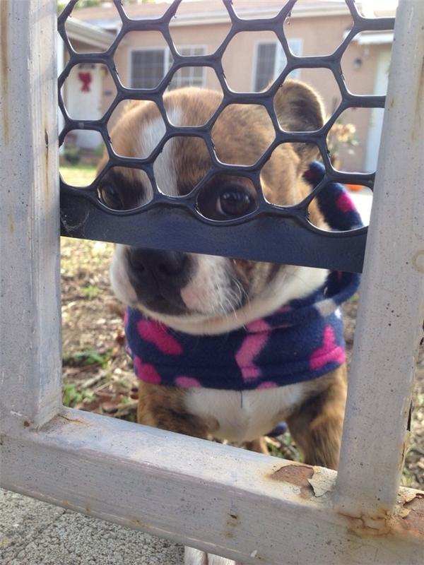 Ai mà không muốn mở cửa chào đón một lời chào từ anh bạn hàng xóm đáng yêu này chứ?(Ảnh: Viral Nova)