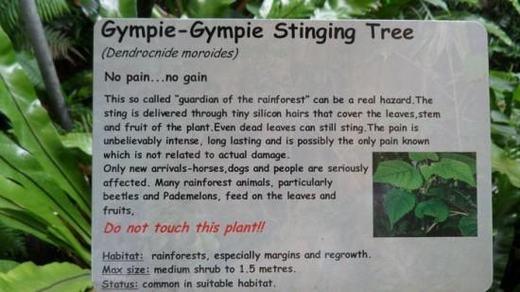 Cảnh báo của một vườn quốc gia về loài cây này. (Ảnh: Internet)