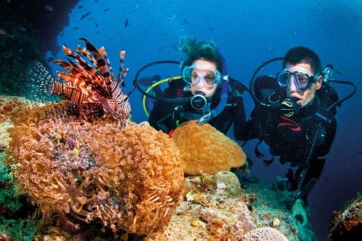 Côn Đảo, Phú Quốc, Cù lao Chàm, vịnh Vĩnh Hy, Nha Trang là những địa điểm lặn biển được xem là đẹp nhất của Việt Nam đang chờ bạn khám phá(Ảnh Internet).