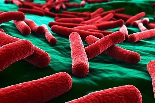 Bestie-Khoe-e-coli