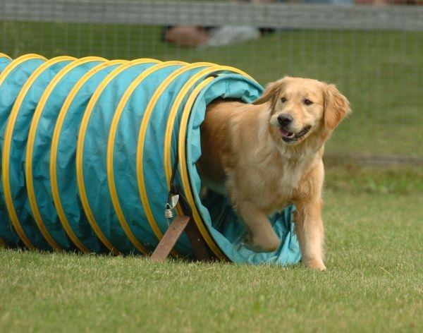 cách bảo vệ thú cưng