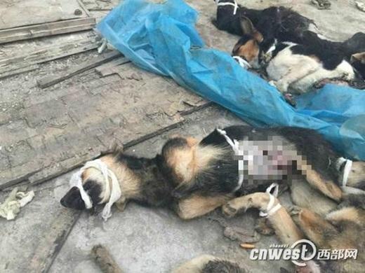 Bức ảnh chú chó bị bịt kín miệng vớinhiều vết thươngđược chia sẻ ngày 5. (Nguồn Internet)