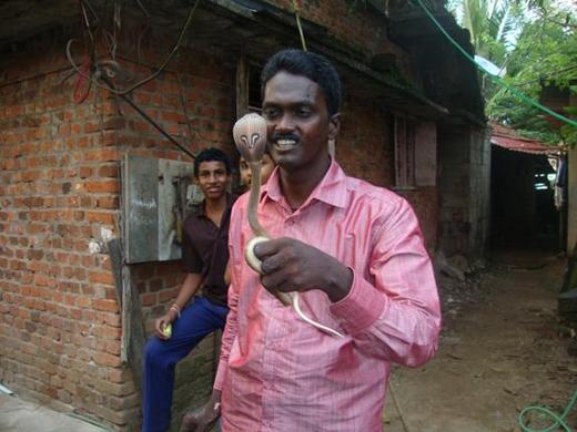 Kinh hoàng người đàn ông dùng tay không bắt hơn 42.000 con rắn