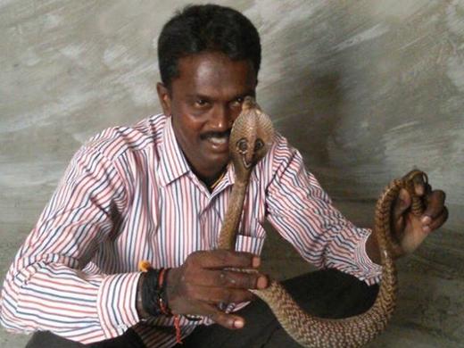 Vava Suresh dùng tay không bắt hàng nghìn con rắn, trong đó có nhiều loại cực độc. Ảnh: Internet