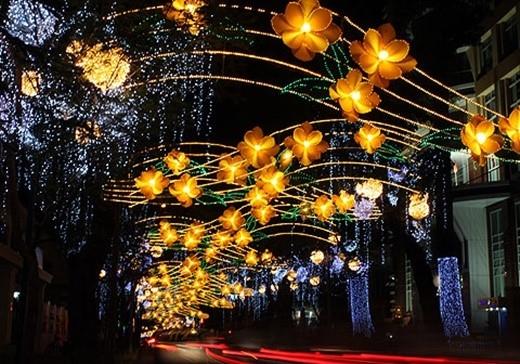 Con đường Đồng Khởi tràn ngập sắc ấm hoa mai.(Ảnh Internet)