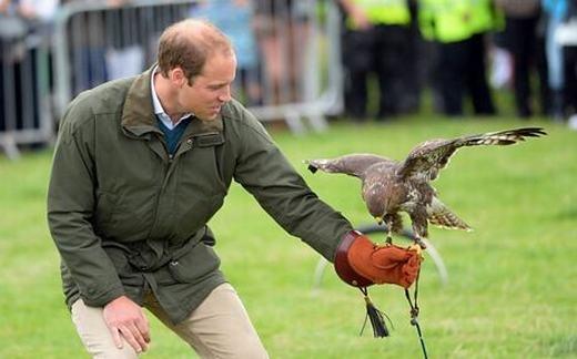 Chim ưng giúp xua đuổi chim chóc quanh sân bay. (Ảnh: Internet)