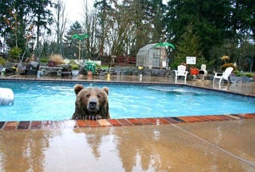 Sao hôm nay bể bơi không có ai vậy?