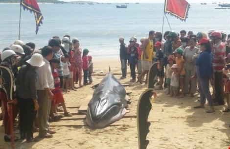 """Người dân chuẩn bị làm nghi lễ đưa cá voi vào lăng """"Ông"""" ."""