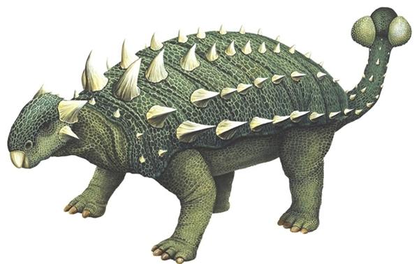 Choáng với hình ảnh kì lạ của loài rùa khủng long trăm năm hiếm thấy