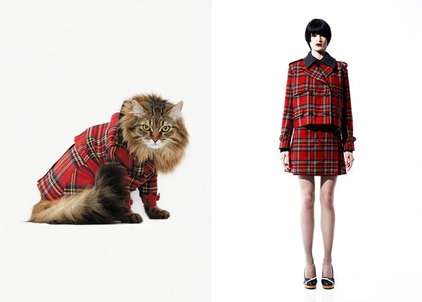 Choáng với hình ảnh Fashionista của các chú mèo trên thế giới