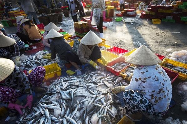 Cảng cá Long Hải là nguồn cung cấp hải sản chính của khu vực lân cận, trong đó có thành phố Hồ Chí Minh.(Ảnh: Nguyễn Vũ Phước)