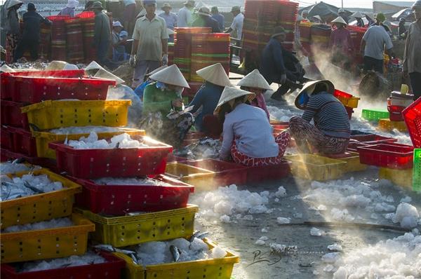 Mọi người ở cảng cá Long Hải phối hợp với nhau rất nhịp nhàng và có trật tự.(Ảnh: Nguyễn Vũ Phước)