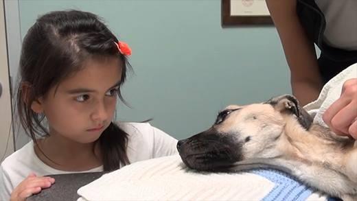 Quá trình hồi phục của chú chó bị bỏ đói suýt chết