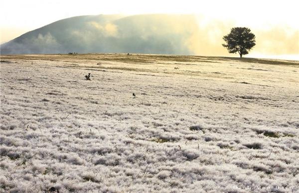 Cánh đồng tuyết ẩn hiện trong làn sương sớm. (Ảnh: Internet)