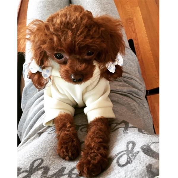 Nổi tiếng trong cộng đồng fan SNSD còn có chú cún điệu đà của Hyoyeon mang tên Vivian. Không chỉ đưa đi chăm sóc sức khỏe định kì, nữ thần tượng còn cho Vivian học bơi và tham gia nhiều hoạt động ngoài trời khác.