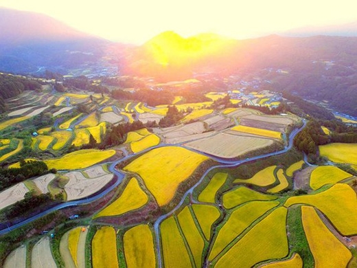 Cánh đồng này trông như một tuyệt tác của họa sĩ Van Gogh.(Ảnh: stevencarreramail_user/SkyPixel)